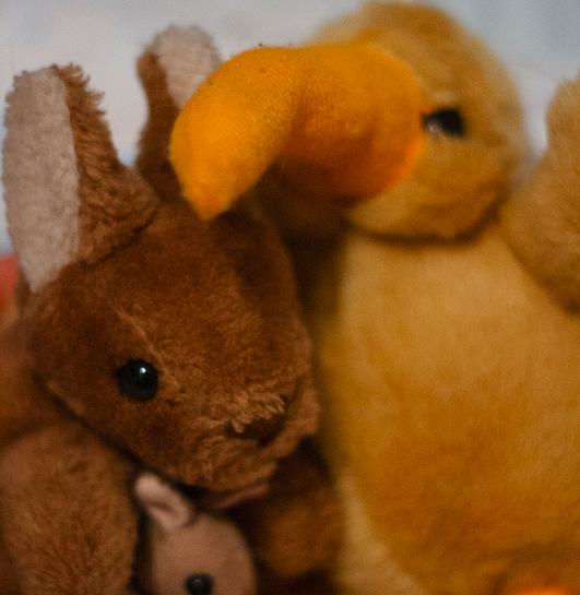 Kiwi and kangaroo