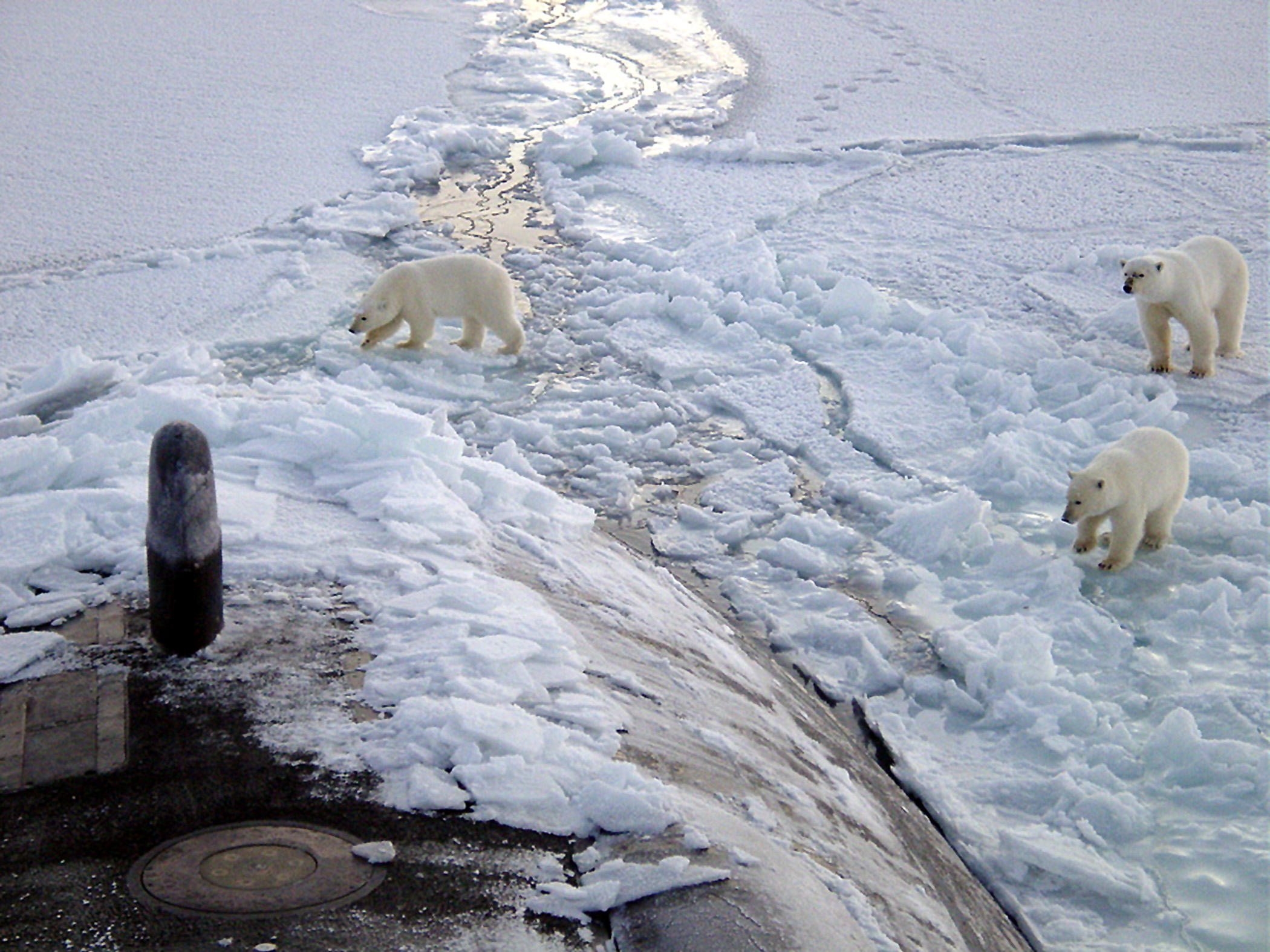 """That's the second biggest whale I've seen!""  Three Polar bears approach the starboard bow of the Los Angeles-class fast attack submarine USS Honolulu (SSN 718) while surfaced 280 miles from the North Pole. Sighted by a lookout from the bridge (sail) of the submarine, the bears investigated the boat for almost 2 hours before leaving."