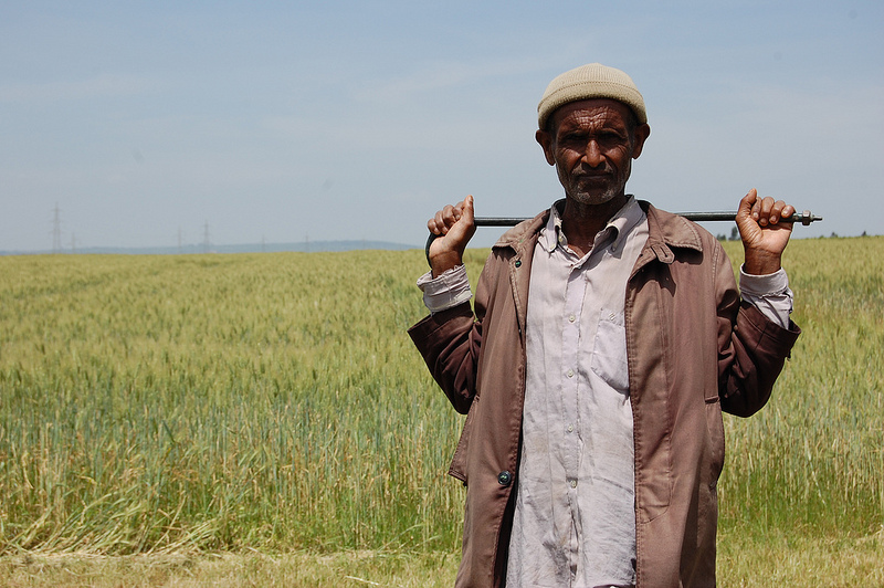 A field worker at the Ethiopian Institute of Agricultural Research (EIAR) at Kulumsa, Ethiopia.