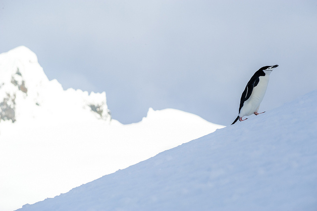 Someone's on a mission in the Antarctic!
