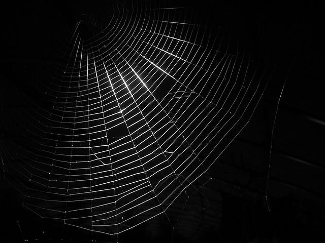 Dark Silk Web