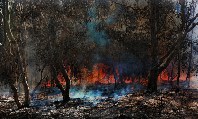 The Australian Bushfire, a typical scene across Australia during summer months.