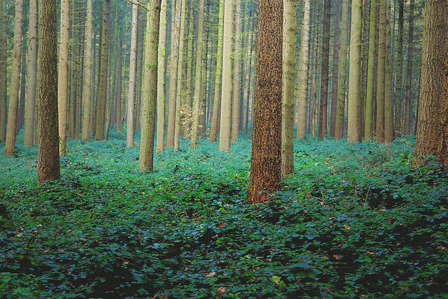 Confronted with the First Principles Review's 70 recommendations, it's easy to lose sight of the forest for the trees