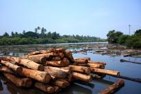 Kallai Timber Yard
