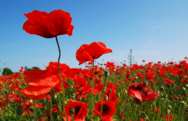 Be proud of your tall poppies | The Strategist