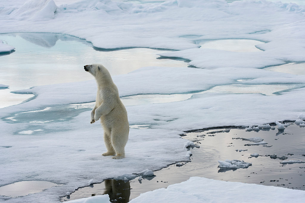 The EU's vision for a rapidly changing Arctic
